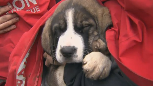 Two puppies rescued from B C  cliff after being stranded for