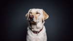 43 dogs have died in Norway from a mysterious disease. (Pexels)