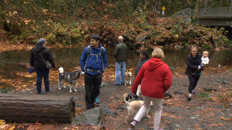 The annual salmon run at Goldstream Provincial Park attracted no shortage of attention over the weekend. Oct. 29, 2018. (CTV Vancouver Island)