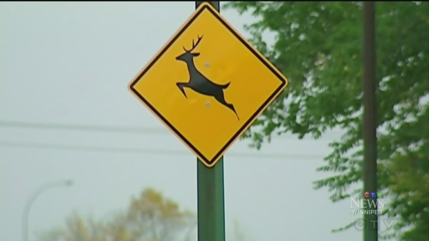 Staying safe with deer on the road