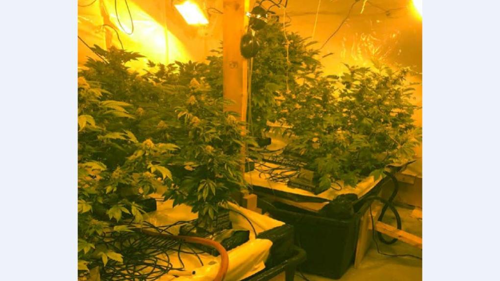 Cannabis Grow-Op