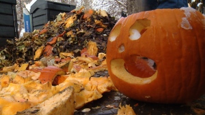 Banff National Park is reminding residents to consider wildlife when putting out Halloween decorations. (File)