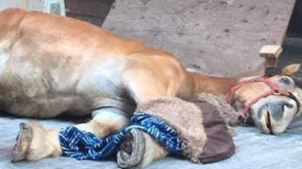 Courtesy: Facebook/Sauvetage Animal Rescue