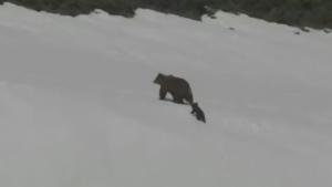 Trending: A bear that slips