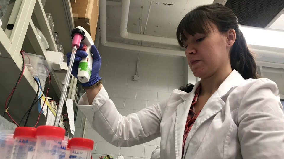 Bre-Anne Fifield pipetting in a lab at the University of Windsor in Nov. 2018. (Rich Garton / CTV Windsor)
