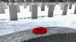 Hundreds of poppies were laid on military headstones in Edmonton's Beechmount Cemetery on Monday, Nov. 5, 2018.