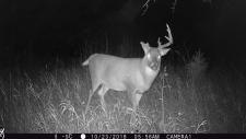Deer on Oct. 23