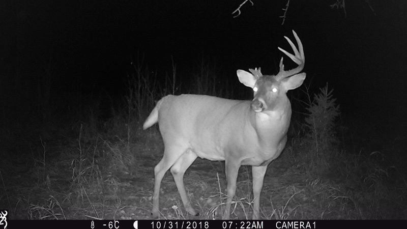The surviving deer was seen again on Oct. 31. Supplied.