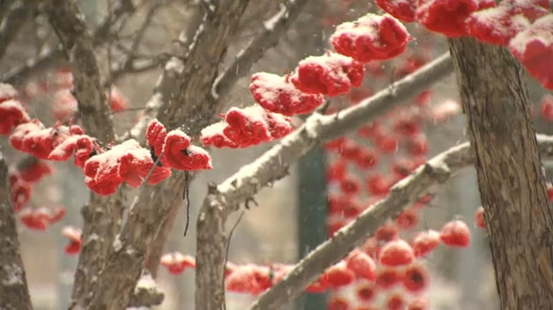 Hand-knit poppies hang from the trees outside of Cathedral Church of the Redeemer