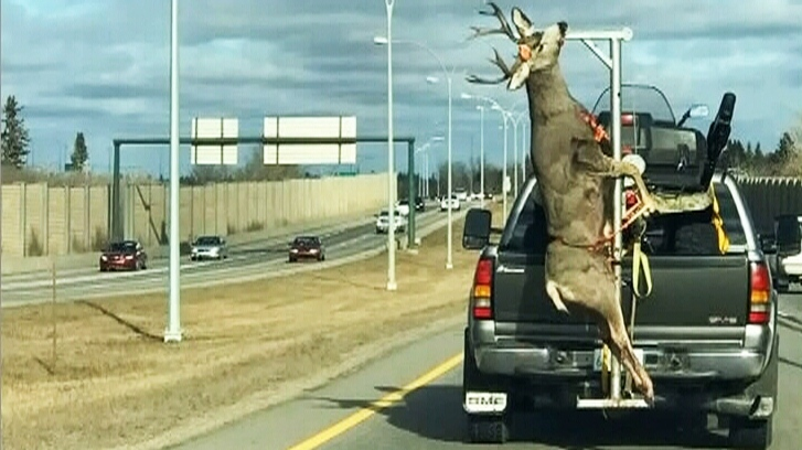 This photo of a deer carcass on a truck has sparked controversy. (Sarah Ingram/Facebook)