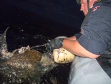 turtle buoy caribbe hmcs nanaimo