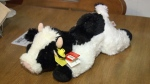 Calf for Kids - Lethbridge