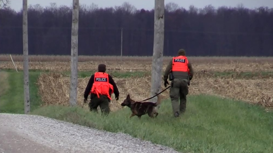Police and K-9 officers search the area near where three bodies were found in a vehicle in Middlesex Centre, Ont., Wednesday, Nov. 7, 2018 (Sacha Long / CTV London)