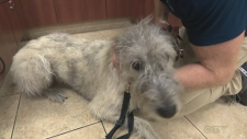 In this week's pet care segment, Rebecca Nobrega talks to veterinarian Dr. Chad Wilkinson of Lockerby Animal Hospital about canine influenza.
