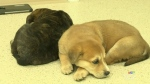 Puppies recovering after found in cold