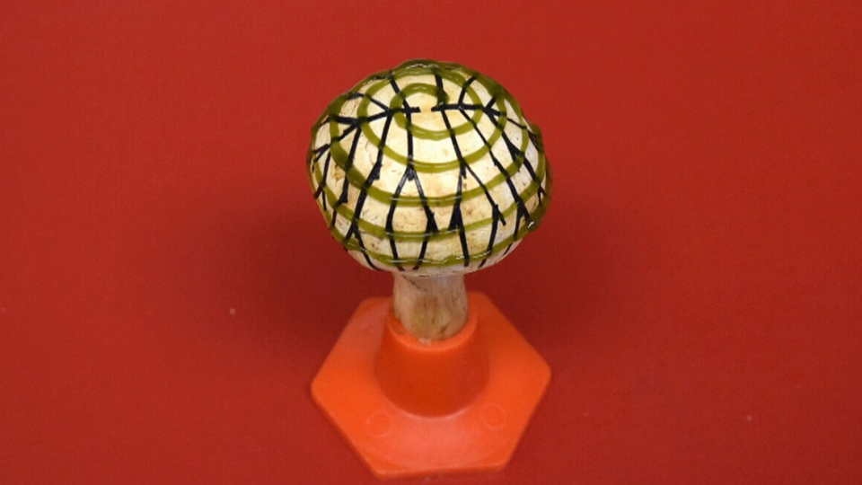 U.S. researchers used 3D-printing and energy-producing bacteria attached to the cap of a mushroom to generate a small amount of electricity.
