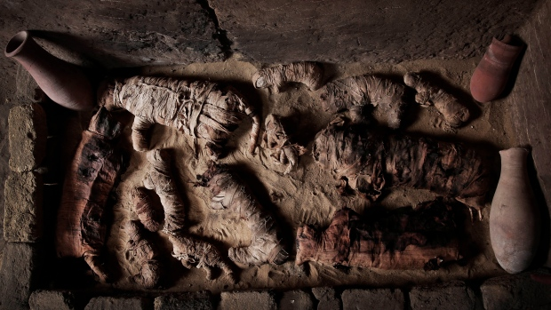 Egypt's newly discovered tombs hold cat mummies, animal statues