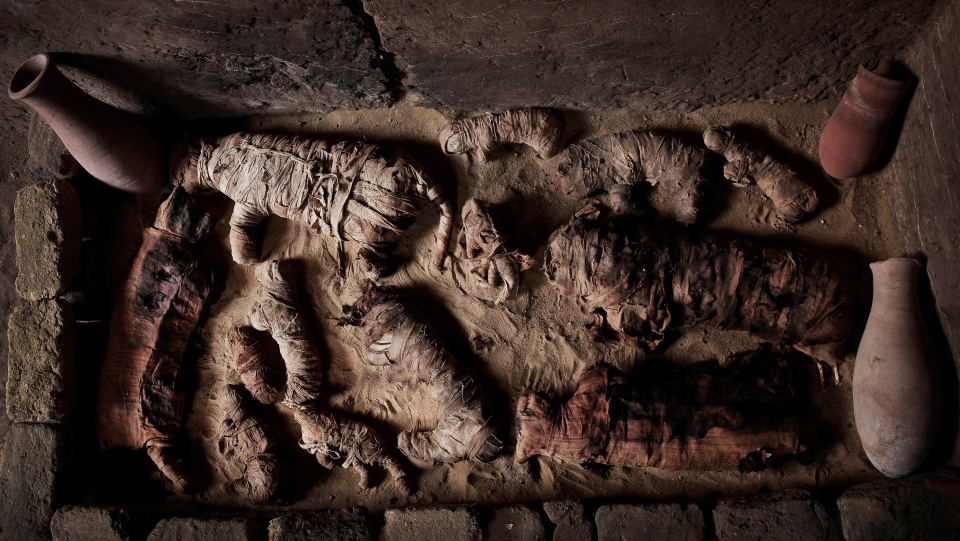 Mummified cats inside a tomb, at an ancient necropolis near Egypt's famed pyramids in Saqqara, Giza, Egypt, Saturday, Nov. 10, 2018. A top Egyptian antiquities official says local archaeologists have discovered seven Pharaonic Age tombs near the capital Cairo containing dozens of cat mummies along with wooden statues depicting other animals. (AP Photo/Nariman El-Mofty)