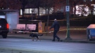 A police dog was called to search the Metrotown area.