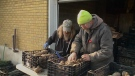 Michael Milsom sorting potatoes with Jason Froome.