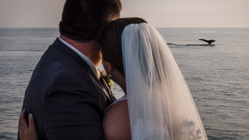 Becky Cook and John MacKenney were treated to an incredible show on their wedding day. The couple married on a whale-watching boat and the marine animals didn't disappoint on their big day.  (Jenn Nauss/Cooked Photography)