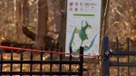 Police tape blocks a gate to a wooded area on Nuns' Island where the body of a 17-year-old was discovered on Nov. 12, 2018.