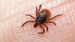 Lawsuit over Lyme Disease