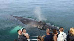 CTV National News: Whales crash wedding