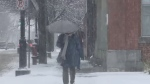 A pedestrian braves the wintry weather in Fredericton on Nov. 13, 2018.
