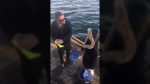 The video, which first surfaced on Facebook Monday, shows a man trying to educate two people after they allegedly filled a bucket with undersized crabs. Nov. 12, 2018. (Facebook)