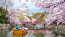 Cherry blossom season in Japan. (RichieChan / IStock.com)