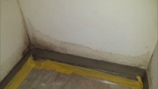 Black mould nightmare in subsidized housing