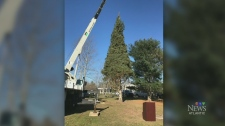 Nova Scotia's tree for Boston begins journey Nova