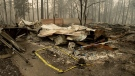 Tape marks a spot where sheriff's deputies recovered the body of a Camp Fire victim in Paradise, Calif., on Nov. 14, 2018,. (Noah Berger / AP)