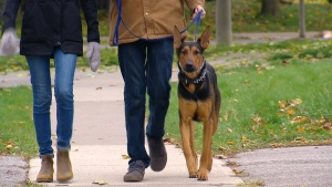 Ben Martin and Diana Popovici are seen walking their puppy Zeus.