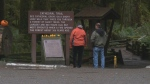 The Ministry of Transportation and Infrastructure is hosting feedback sessions centering on safety at the popular tourist attraction of Cathedral Grove. Nov. 15, 2018. (CTV Vancouver Island)