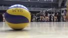 The University of Waterloo's volleyball team. (Nov. 2018)