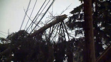 Part of a tree fell on the power lines in an alley near Fortune Road S.E.