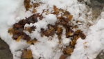 A heavy snowfall on Thursday and Friday led to slick conditions, compounded by wet leaves beneath.