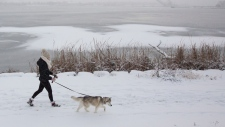 A woman walks her dog in a snow covered park in Kingston, Ont. on Friday Nov 16, 2018. THE CANADIAN PRESS/Lars Hagberg