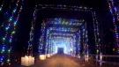 'Magic of Lights' starts Friday