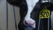 Dairy farmer rebuilds