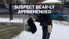 Police take wandering bear cub to animal sanctuary