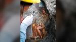 An archeologist cleans up the fresco ''Leda e il cigno'' (Leda and the swan) discovered last Friday in the Regio V archeological area in Pompeii, near Naples, Italy, Monday, Nov. 19, 2018. (Cesare Abbate/ANSA via AP)