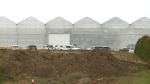 CTV Windsor: Greenhouse electrocution