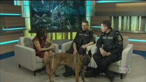 A K9 unit calendar for a cause
