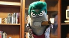 Ed the Sock brings brashness to Victoria, Nanaimo