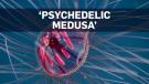 Psychedelic Medusa