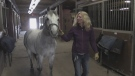 Show horse makes comeback after broken neck