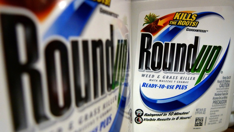 In this June 28, 2011, file photo, bottles of Roundup herbicide, a product of Monsanto, are displayed on a store shelf in St. Louis. (AP Photo/Jeff Roberson)